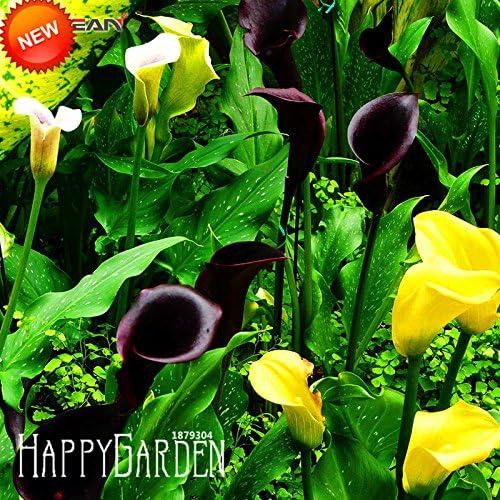 100 semillas / pack, hojas delgadas Flores, rojo sangre semillas raras de la herencia Rose semillas de flor: Amazon.es: Jardín