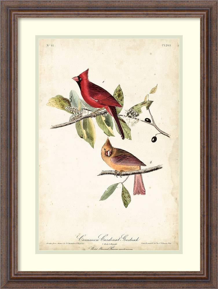 Framed Wall Art Print Common Cardinal Grosbeak By John James Audubon 18 25 X 24 25 Amazon In Home Kitchen