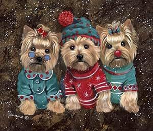 Yorkshire Terrier Elves-GF