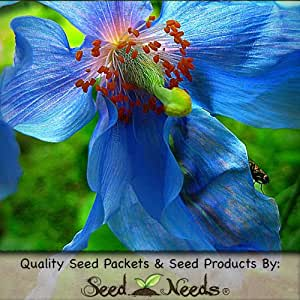 """10 Seeds, Poppy """"Blue Himalayan"""" (Meconopsis betonicifolia) Seeds by Seed Needs"""