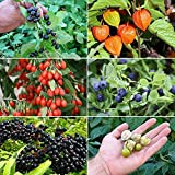 Berry Garden Seed Collection #2 - A 6 Variety Pack of Rare and Medicinal Berry Seeds! FROZEN SEED CAPSULES - The Very Best in Long-Term Seed Storage - Plant Seeds Now or Save Seeds for Years