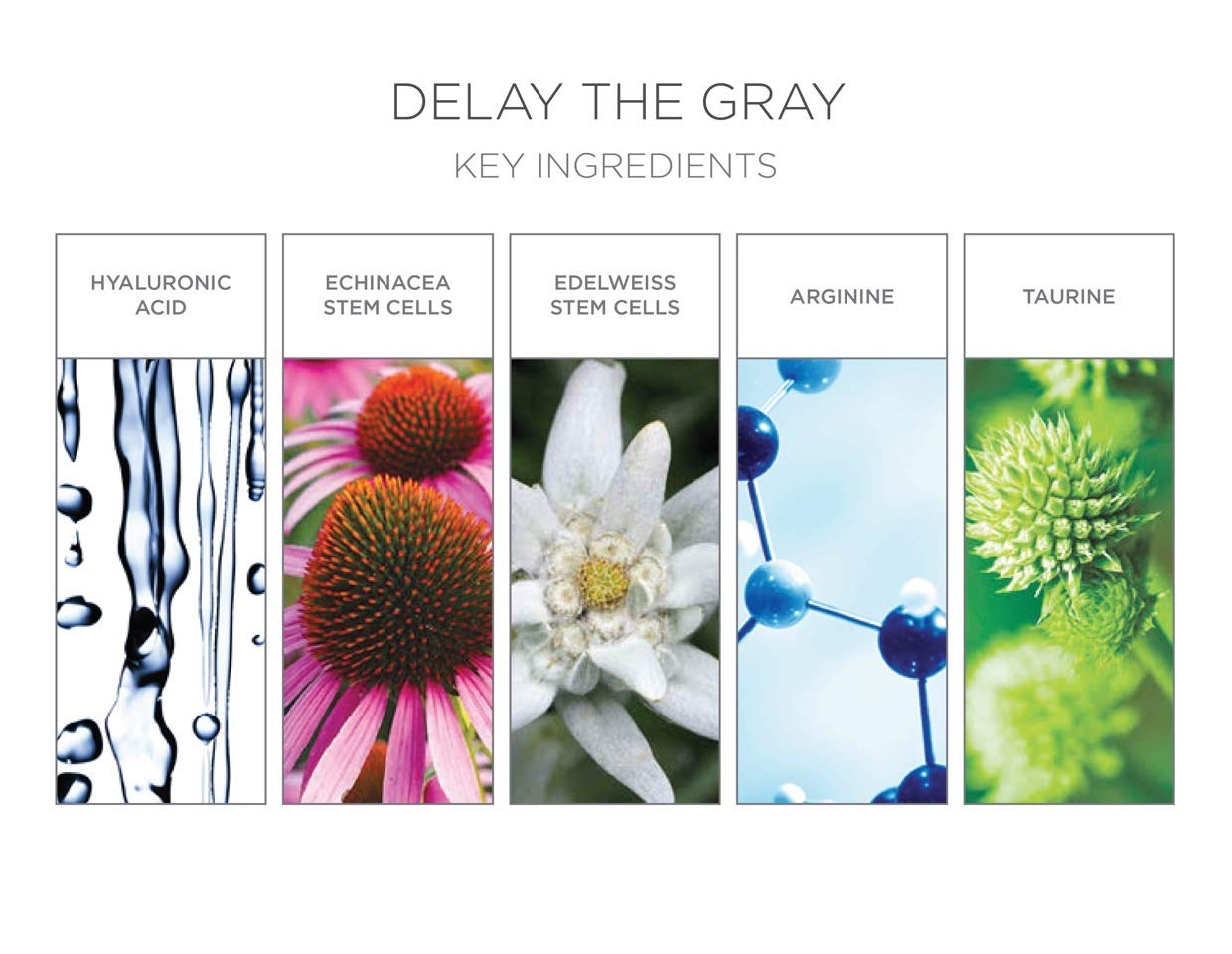 Julien Farel Magnifique Delay The Grey Hair & Scalp Serum, 1.7 Fl Oz – SLS & Paraben Free – Best for Normal, Fine, Thinning, Damaged and All Hair Types, As Seen on The View by Julien Farel Products (Image #3)
