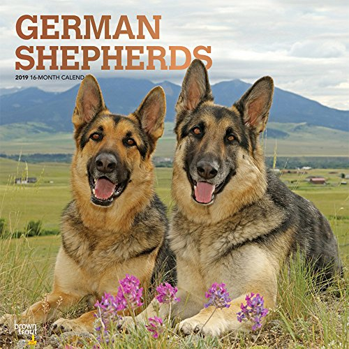 German Shepherds 2019 12 x 12 Inch Monthly Square Wall Calendar with Foil Stamped Cover, Animals Dog Breeds (Multilingual Edition)
