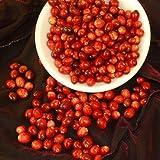 Cranberry Seeds