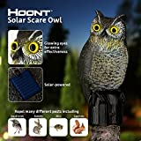 Hoont Realistic Owl Scarecrow with Flashing Eyes and Frightening Sound – Solar Powered and Motion Activated - Frightens Birds and Pests Out of Your Property