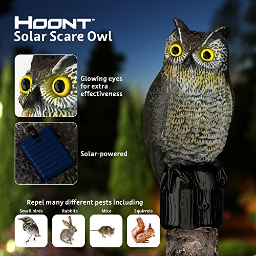 Birds Scare Away - Hoont Realistic Owl Scarecrow with Flashing Eyes and Frightening Sound - Solar Powered and Motion Activated - Frightens Birds and Pests Out of Your Property