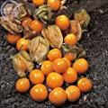 Rare Hierloom Cape Gooseberry (Physalis Peruviana) Seeds, different varietes seeds, professional pack, orange yellow red organic fruits E4133