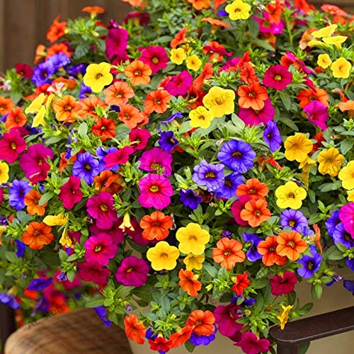 Plant Petunia Seeds - Best-Selling!200pcs Hanging Petunia Mixed Flores Color Waves Beautiful Flowers for Garden Plant Seeds Flower plantas, bjlc4o: Mix