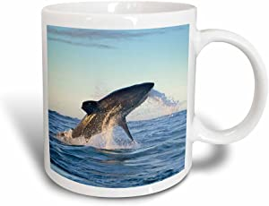 3dRose Great White Shark Moves to Strike a Seal-Janyes Gallery, Magic Transforming Mug, 11-Oz