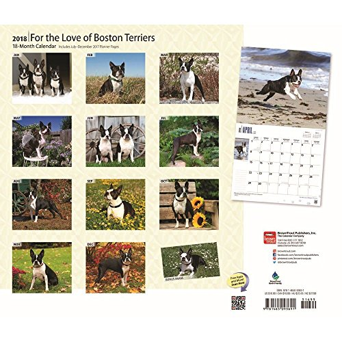 For the Love of Boston Terriers 2018 Deluxe Wall Calendar Photo #3