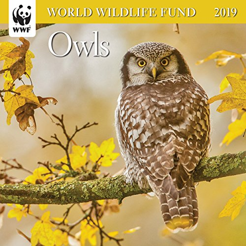 (WWF Owls Mini Wall Calendar 2019 Monthly January-December 7