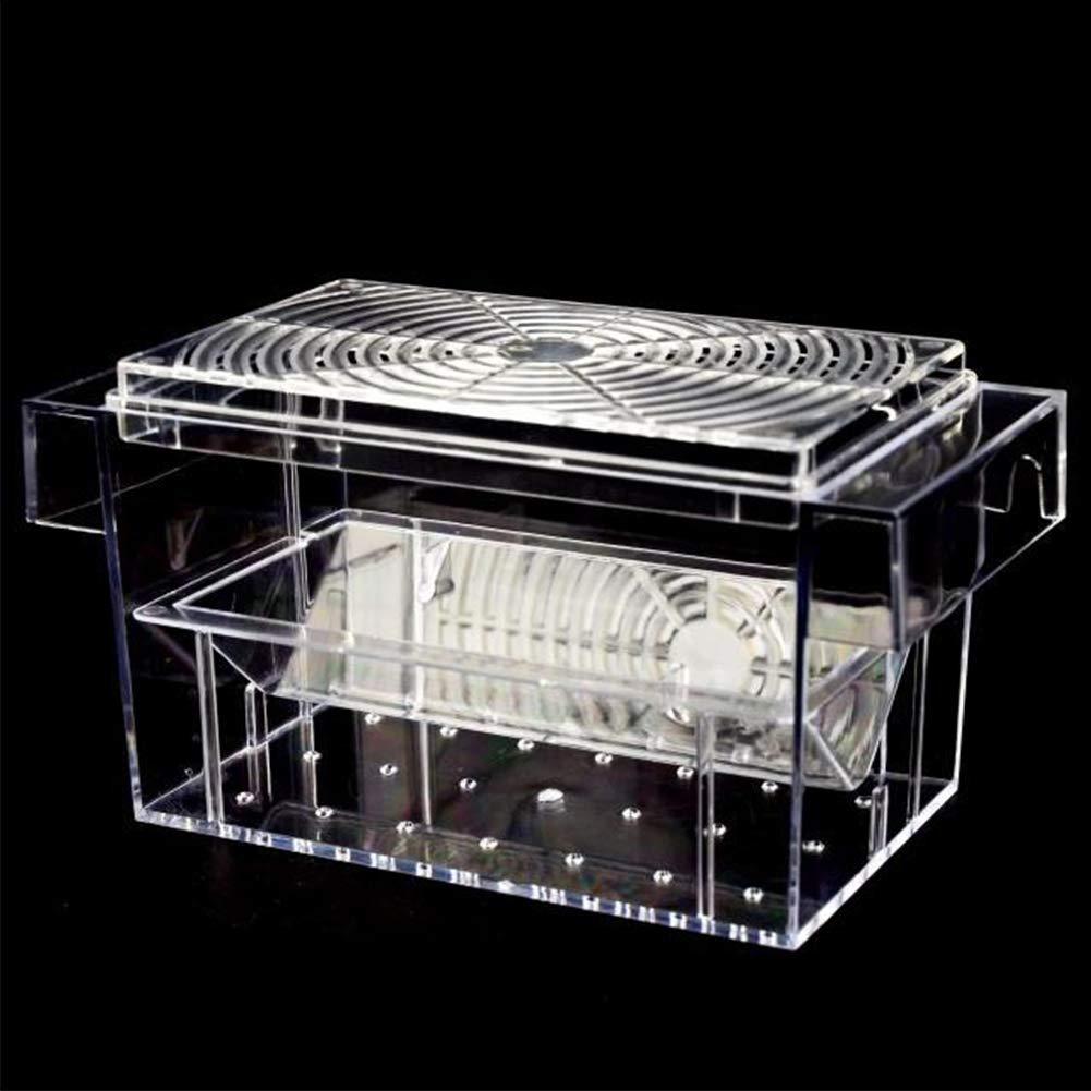 transparente Sue Supply Caja de cultivo para peces acuario caja de aislamiento incubadora de crianza autoflotante