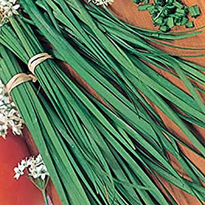Chinese Garlic Chives - Delicious in salads, spreads and flavored vinegars. (25 - Seeds) : Garden & Outdoor
