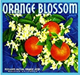 Redlands Orange Blossom Brand Blue Version Orange Citrus Fruit Crate Box Label Art Print