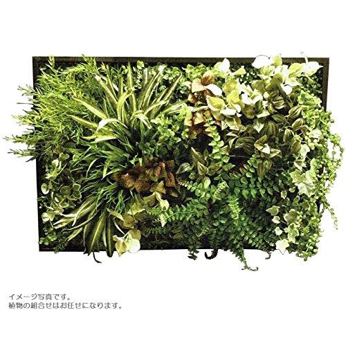 人工観葉植物 アーティフィシャルグリーンアレンジ壁面植裁 幅78cm rg-018 B074FXBWFB
