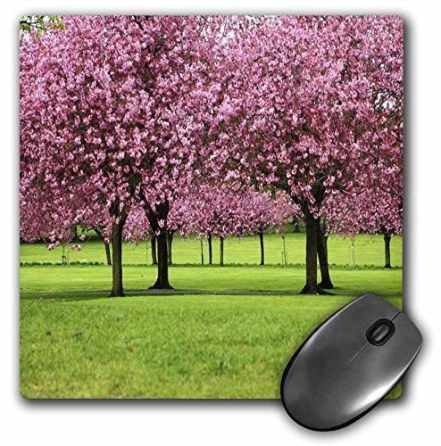 3dRose LLC 8 x 8 x 0.25 Inches Cherry Blossoms in Washington DC Mouse Pad (mp_56109_1)