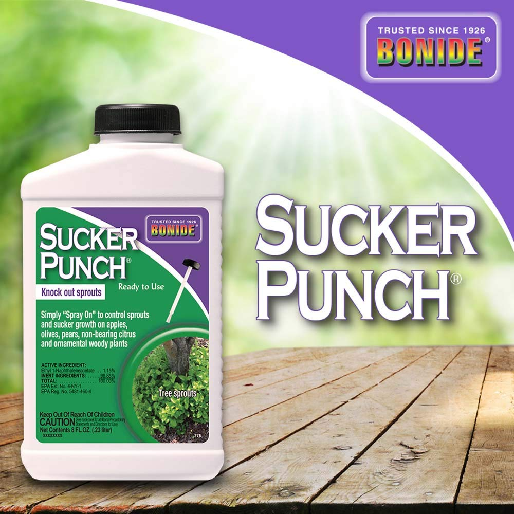 Bonide (BND276) - Ready to Use Sucker Punch, Stop Suckers Sprouting from Roots and Pruning Cuts (8 oz.) by Bonide