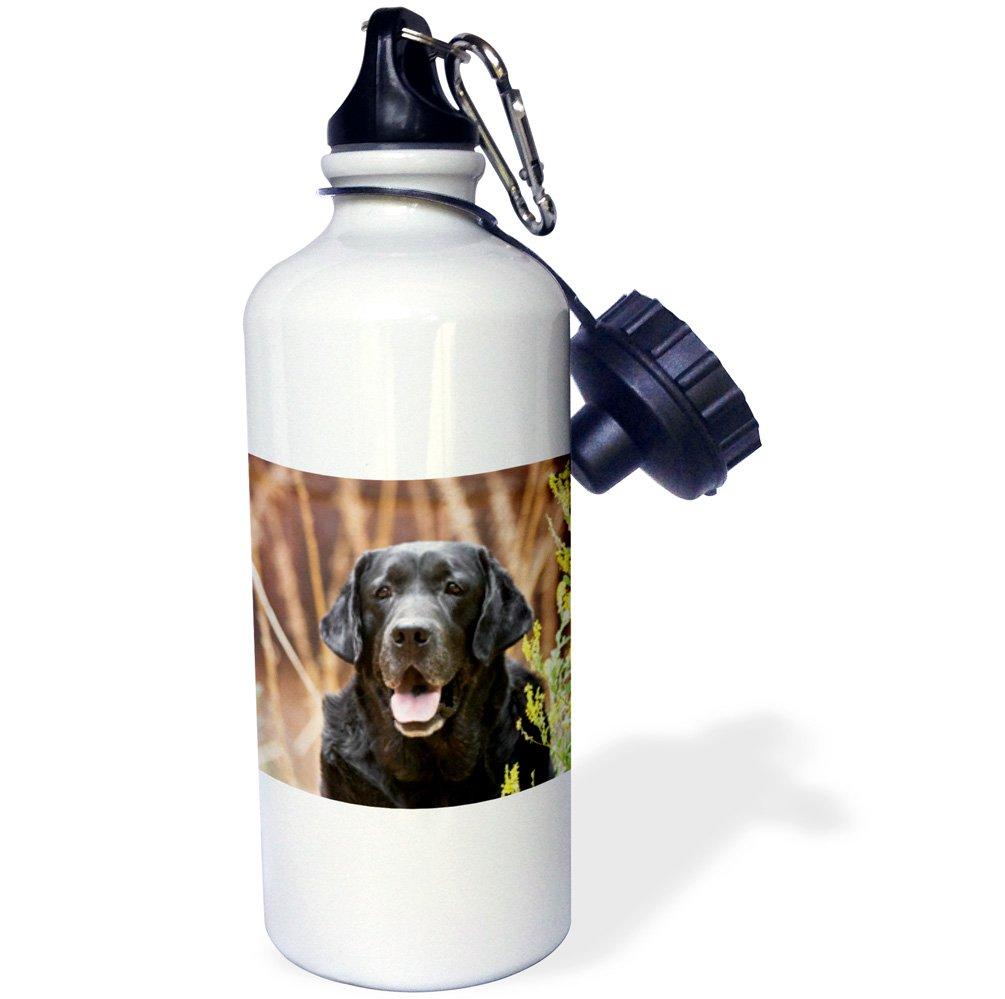 White 3dRose wb/_140442/_1Portrait of a Black Labrador Retriever dog NA02 ZMU0163 Zandria Muench Beraldo Sports Water Bottle 21 oz