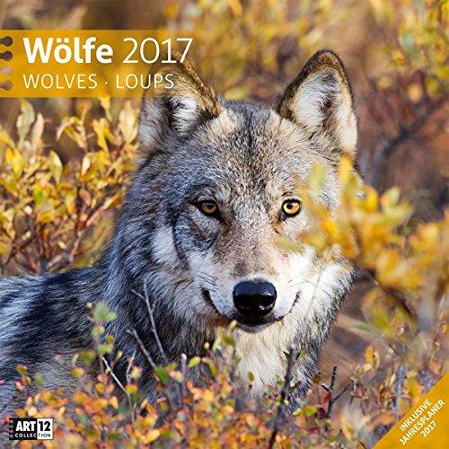 wlfe-30-x-30-cm-2017
