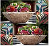 Kalanchoe thyrsiflora Seeds - ,Growing Cactus seeds is fun & rewarding(100 Seeds)