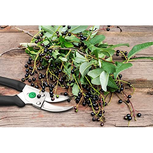 Vremi Garden Pruning Shears - Heavy Duty Garden Clippers with Rust ...