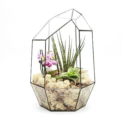 44cm High Extra Large Gem Terrarium With Live Succulent Plants