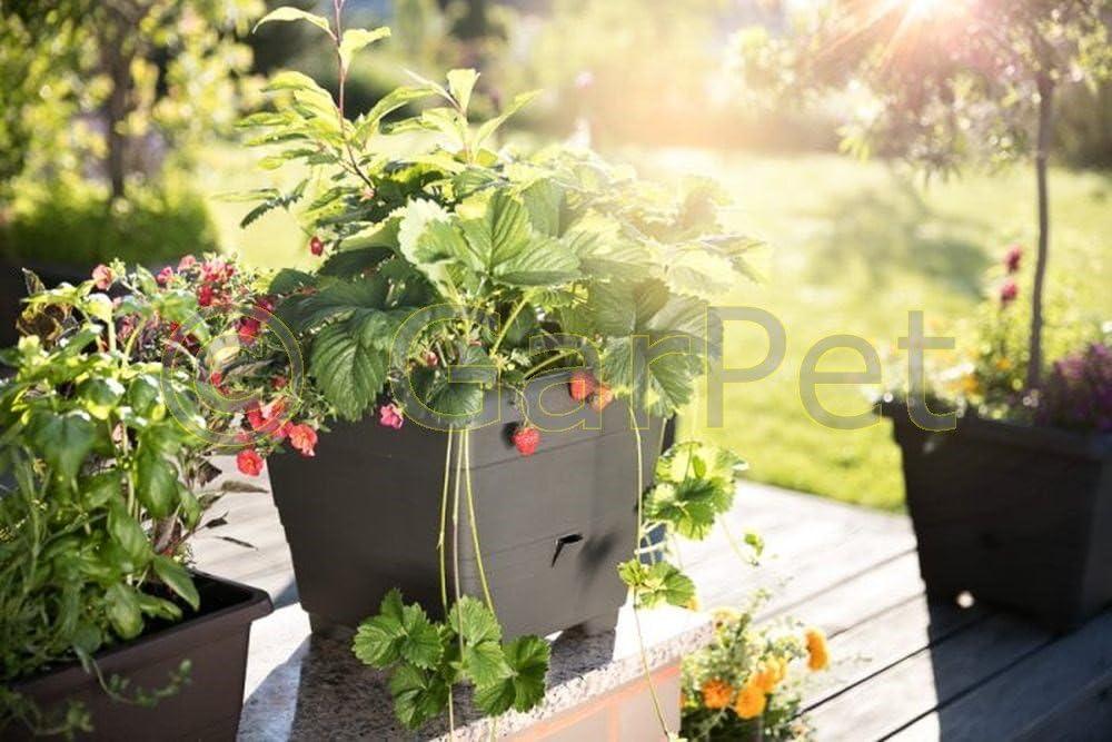 Pot /à eau M/émoire Bergamot planz Fleurs Pot en plastique aux herbes aromatiques 40x40 cm chocolat