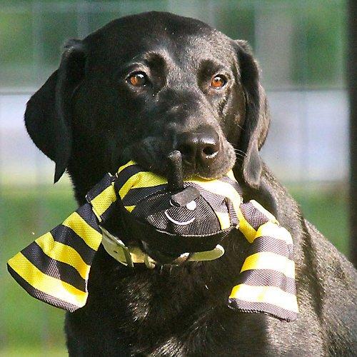 Jolly-Tug-Bumblebee-Dog-Toy