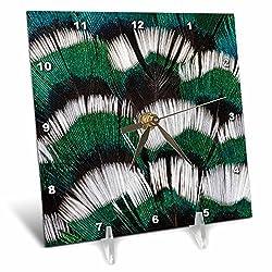 3dRose Danita Delimont - Feathers - Ring-necked Pheasant neck feathers - 6x6 Desk Clock (dc_250132_1)