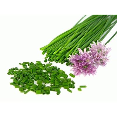 300++ Chives Seeds NON-GMO Mild Onion Flavor Herb : Garden & Outdoor