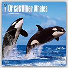 Orcas Killer Whales 2017 Square 12x12 Wall Calendar