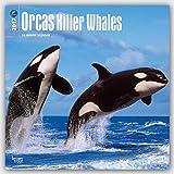Orcas - Killerwale 2017 - 18-Monatskalender: Original BrownTrout-Kalender [Mehrsprachig] [Kalender] (Wall-Kalender)