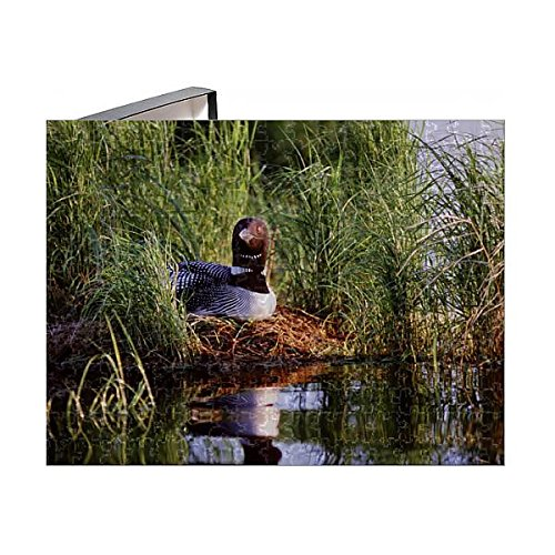 Media Storehouse 252 Piece Puzzle of USA, Minnesota, Common Loon, Nest, Leech Lake (11160005)