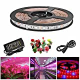 HJD Light®LED Plant Grow Strip Light Waterproof SMD 5050 60leds/M Red Blue 4:1 Lighting Ribbon with Power Adapter For Indoor Greenhouse Hydroponic Plants Flower Growing (5M) Review