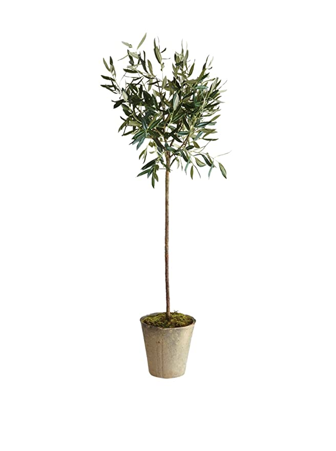 Napa Home & Garden Olive Tree in Pot, 46-Inch