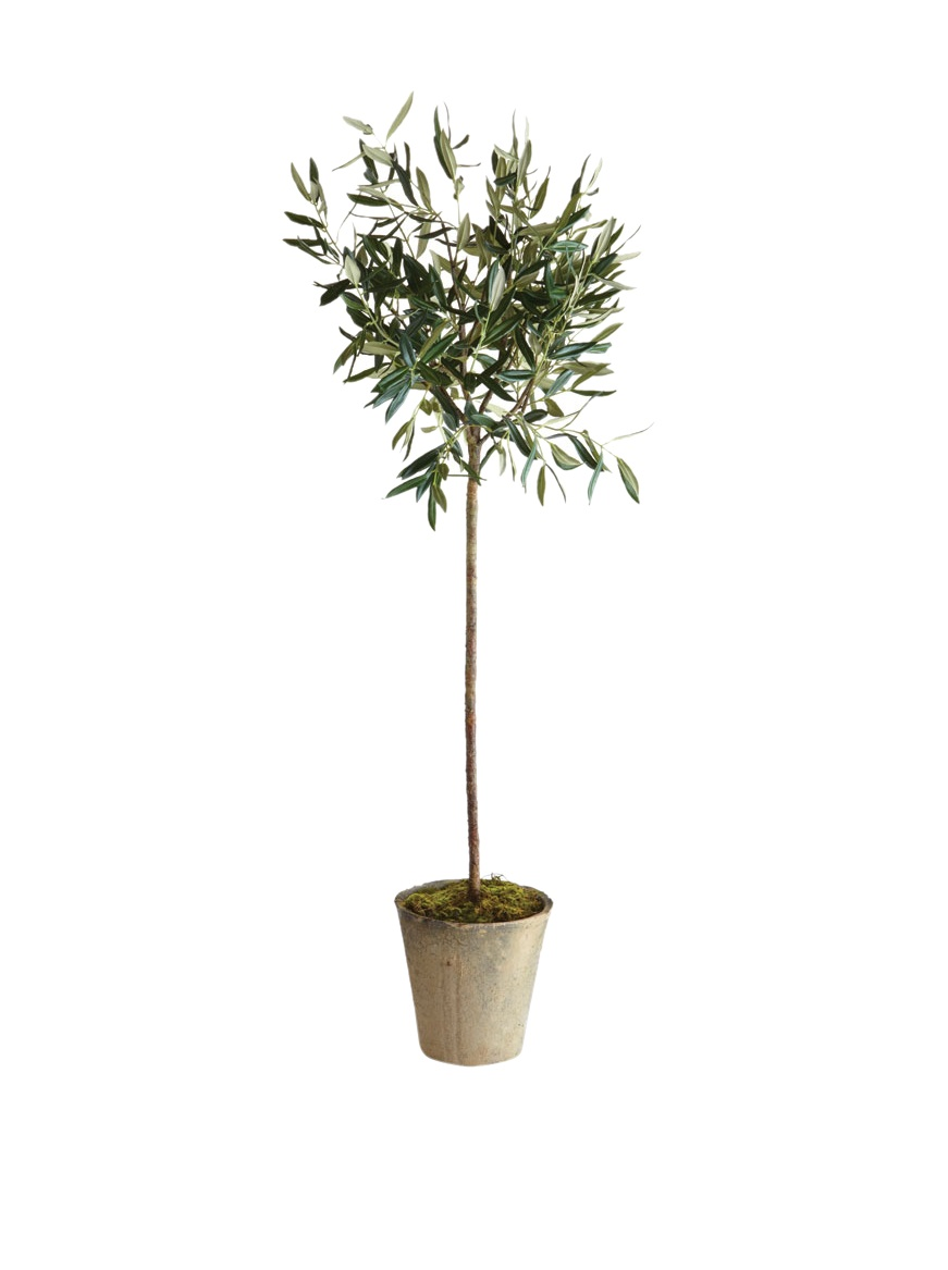 Napa Home & Garden Olive Tree in Pot, 46-Inch