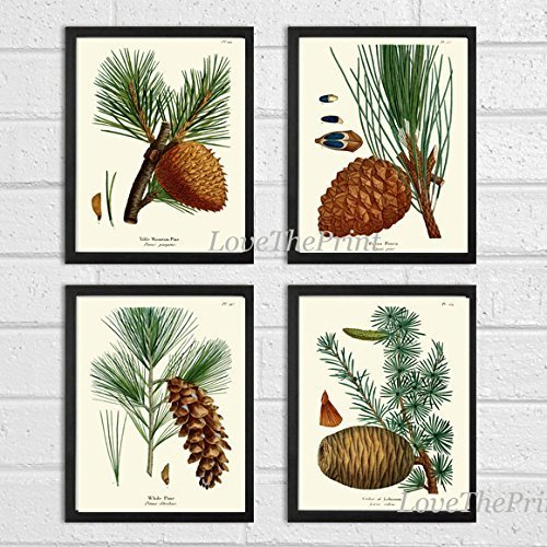 Botanical Print Set of 4 Antique Beautiful Redoute Pinecones Pine Tree Green Forest Nature Home Room Decor Wall Art Unframed (Pine Cone Art)