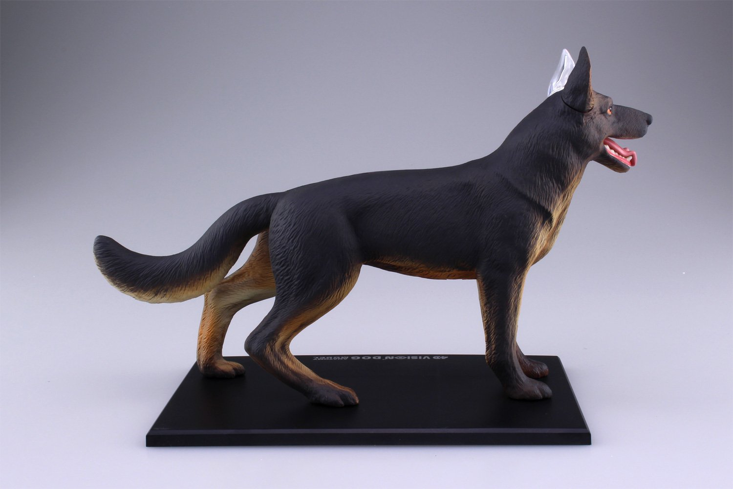 Colorful 3d Canine Anatomy Images - Physiology Of Human Body Images ...