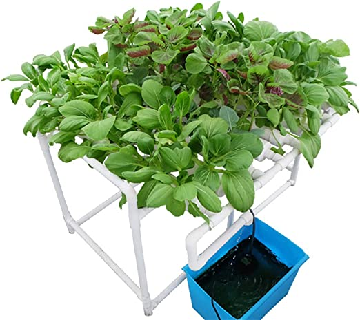 CRZJ Kit de Cultivo hidropónico 72 sitios Flujo reflujo Cultivo en Aguas Profundas Cepillado Sistema de Vegetales de jardín: Amazon.es: Hogar
