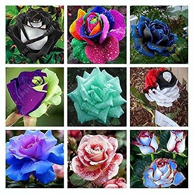 C-Pioneer 200pcs Mixed Style Rare Rose Flower Seeds Plants Decor Multi-Color Home Garden Plants : Garden & Outdoor
