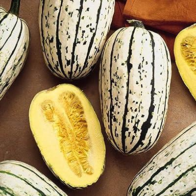 Kings Seeds - Winter Squash Cornells Bush Delicata - 15 Seeds