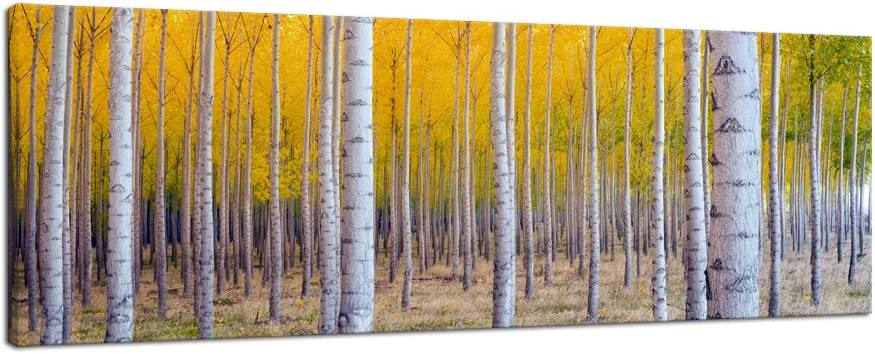 Pyradecor Giclee Canvas Prints Wall Art White Birch Trees Pictures Paintings for Living Room Home Decorations Large Autumn Forest Modern Stretched and Framed Yellow Landscape Artwork 48x16 Inch