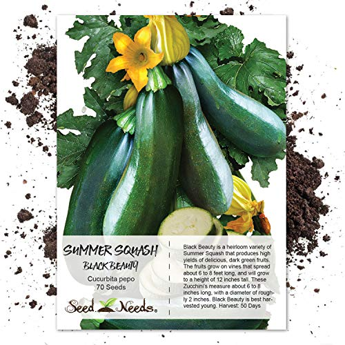 Seed Needs, Black Beauty Zucchini Summer Squash (Cucurbita pepo) 70 Seeds Non-GMO