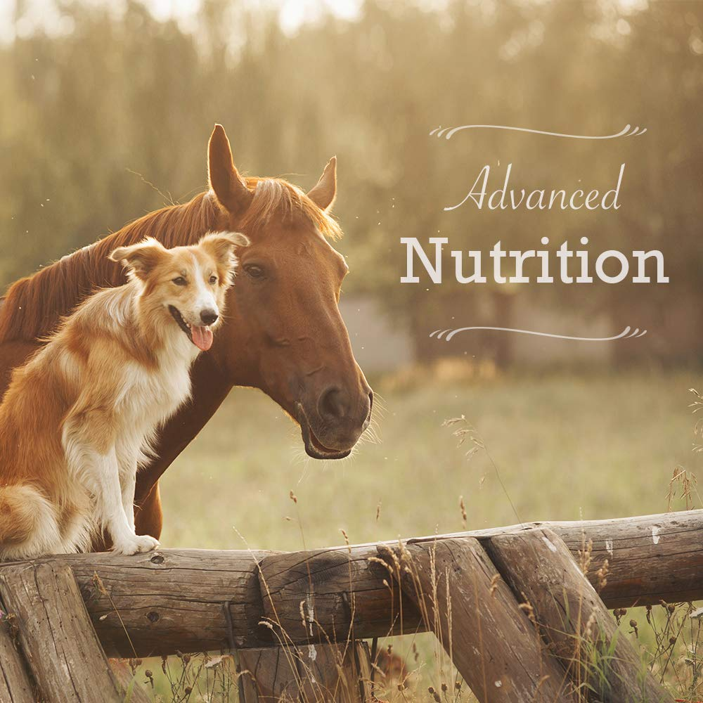 Animal Health Solutions - Hen Boost Probiotics, Help Boost Immunity and Hydration in Full Grown Chickens (8 ounces) by Animal Health Solutions (Image #8)