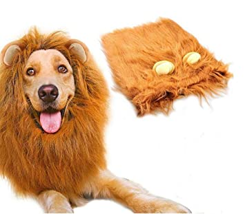 Amazon.com: Disfraz de perro Dan Lion Mane, Hilarious ...