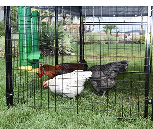 High End Hen Poultry Feeder and Waterer