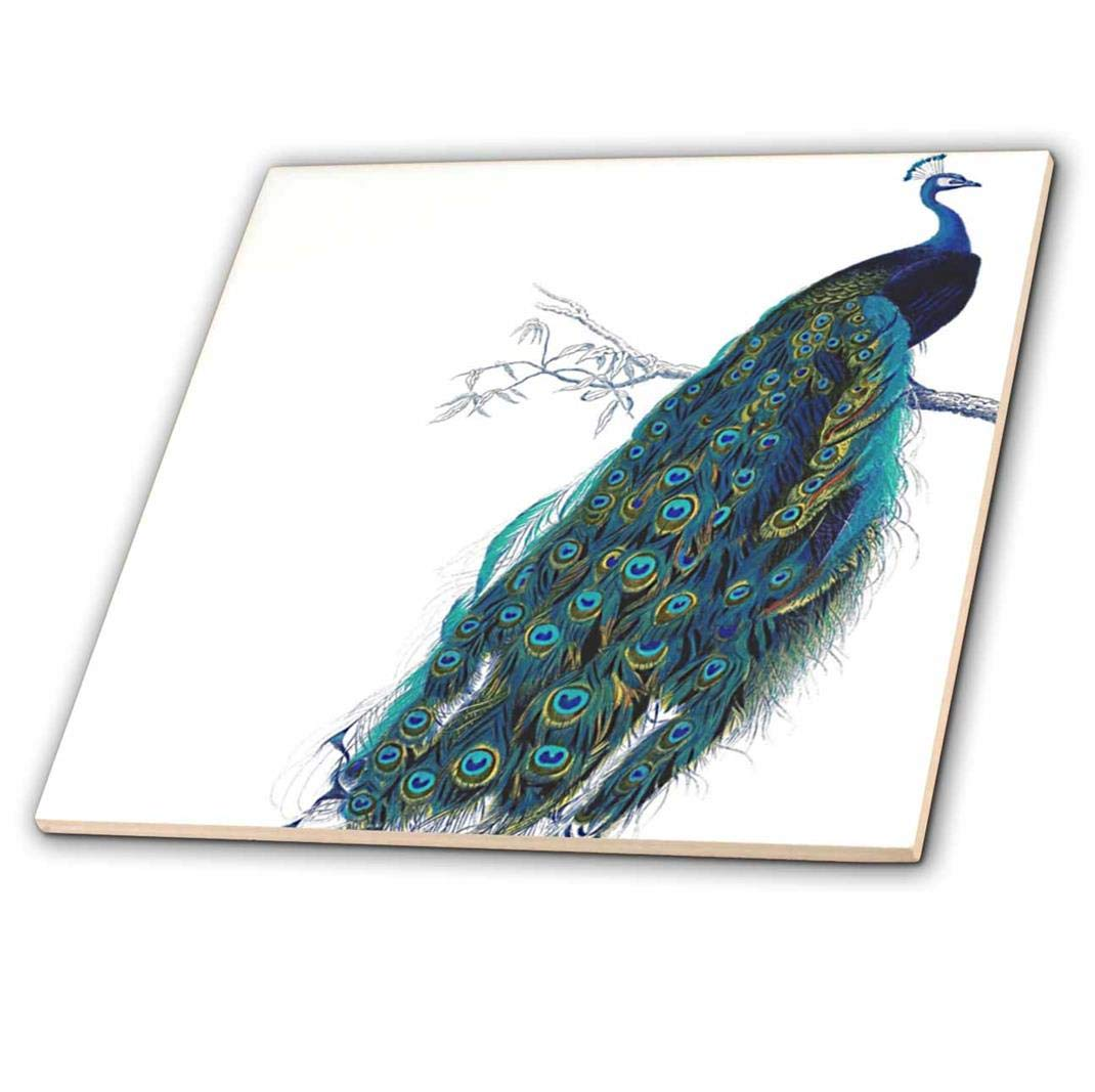 6-Inch 3dRose ct/_113188/_2 Vintage Peacock Art-Blue and Green Bird on Branch Beautiful Tail Feathers-White-Ceramic Tile