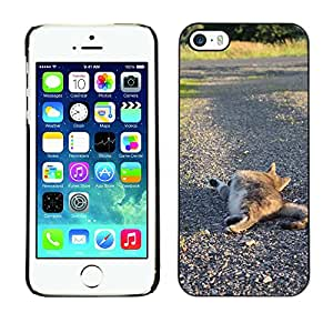 Hot Style Cell Phone PC Hard Case Cover // M00114125 Cat Animal Pet Feline Domestic // Apple iPhone 5 5S 5G