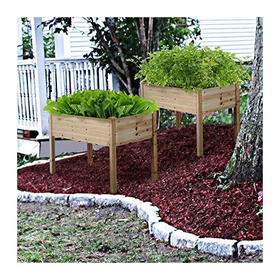 YAHEETECH Wooden Raised/Elevated Garden Bed Planter Box Kit for Vegetable/Flower/Herb Outdoor Gardening Natural Wood, 49 x 23.2 x 30.1in 6 Natural solid wood: This natural raised garden bed is made of non-paint, harmless 100% solid wood, which is known for its strength and dimensional stability as well as its natural resistance with a pleasing wooden smell. It is normal that there are wood knots on the surface. That's a natural phenomenon when the wood is growing. Single piece of side plate: Comparing to other planting beds that have several small pieces of wooden plates at the side, our planting raised bed has a piece of complete side plate at each side of the garden bed. This single-piece design makes the whole structure very stable, and the installation very easy. The side plates are fixed firmly without leakage of soil. Backache-friendly design: Given its 76.5cm/30.1'' height, people with backache/knee pain can easily manage the plants without bending down and taking the risk of pain. The thick solid wood boards are sanded well to prevent any undesired injury caused by wood splinters.