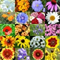 Bulk Package of 30,000 Seeds, Dryland Wildflower Mixture (20 Species) Non-GMO Seeds By Seed Needs